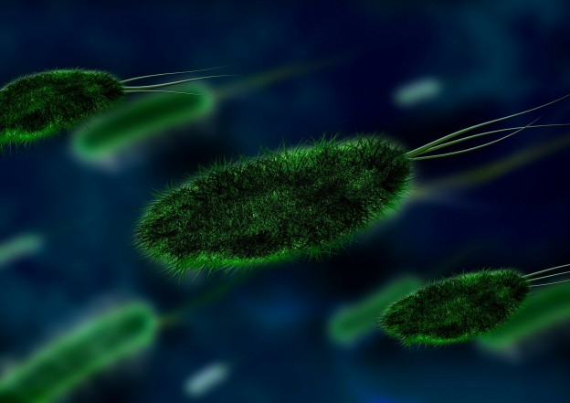 Bacteria in Dirty Carpets